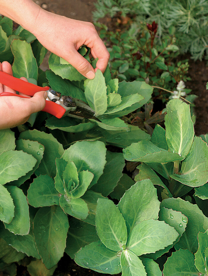 pruning helps avoid staking plants