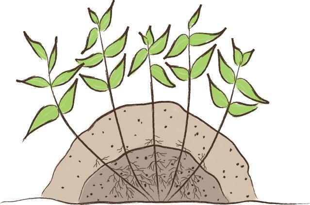 Mound layering