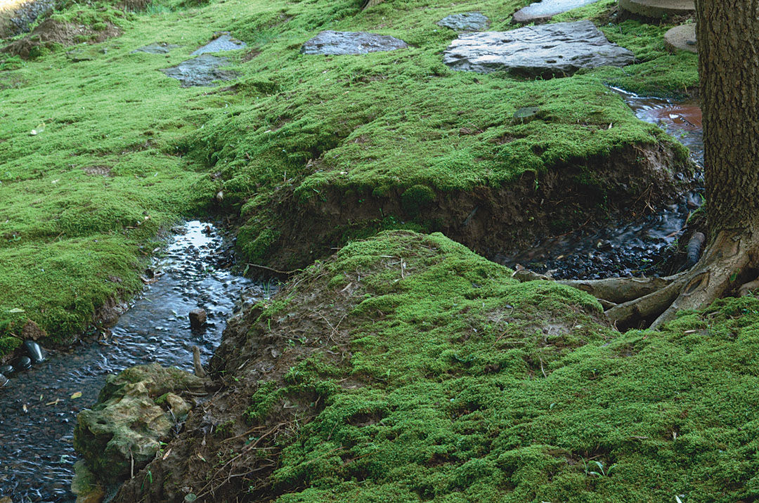 How To Use Moss In The Landscape