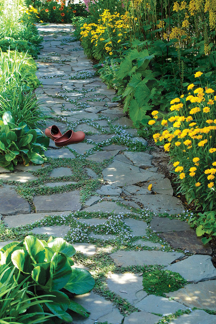 Plants for Pathways - FineGardening