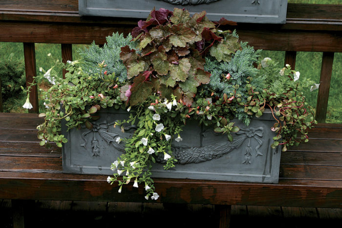 10 Plants For Year Round Containers Finegardening