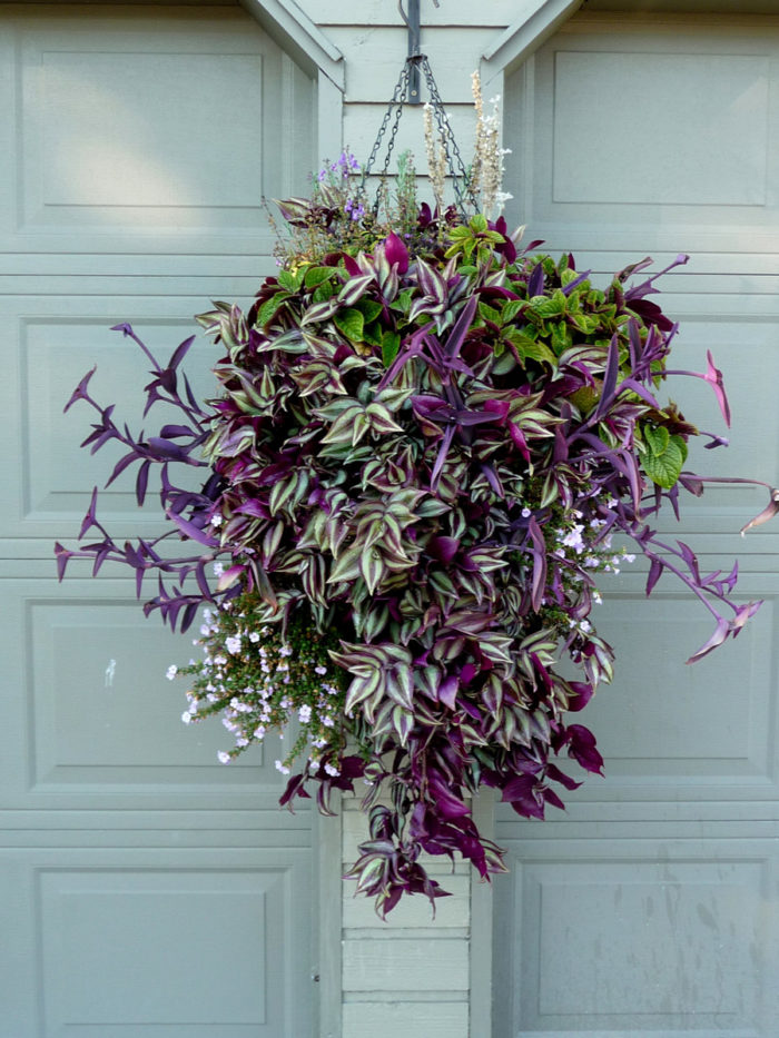How to Make and Plant a Hanging Basket
