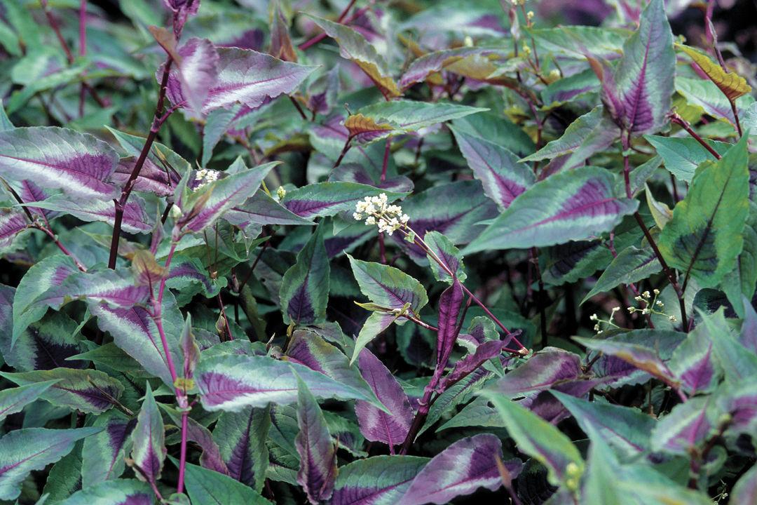 low-maintenance plants