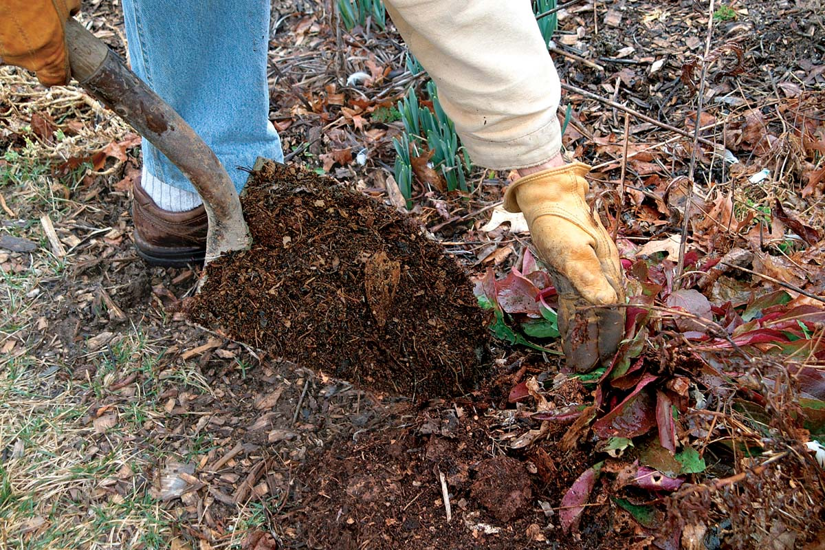 Use leaf mold as mulch. It helps to retain moisture in the soil and to prevent extreme temperature fluctuations.
