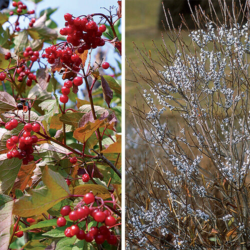 trees and shrubs with fall fruit