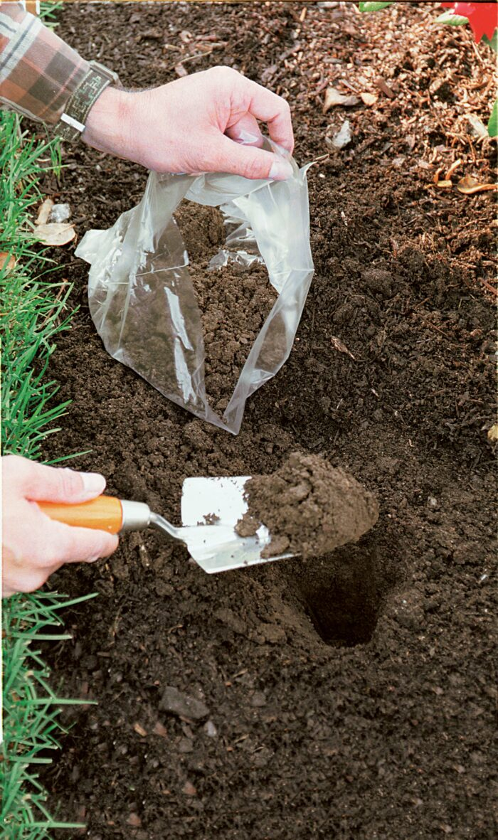 take soil sample from root zone