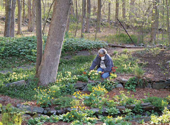 How to Grow Primroses - A Note to a Flower Southern Woodland Garden Landscape Design on rock garden landscape design, woodland garden design plans, urban landscape design, cottage garden landscape design, english woodland garden design, wild flowers garden landscape design,