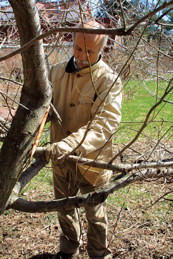 cutting tree branches that are problematic
