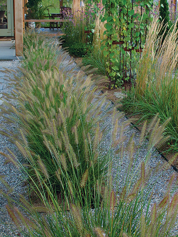 Designing With Grasses Finegardening