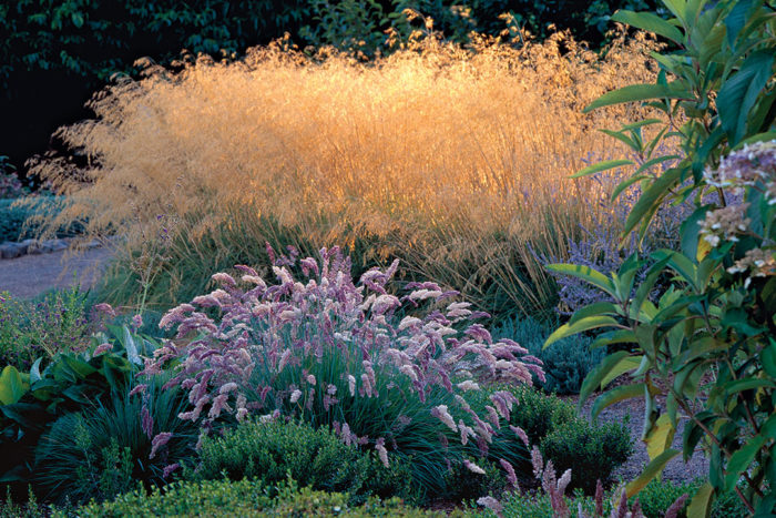 9 New And Unusual Ornamental Grasses