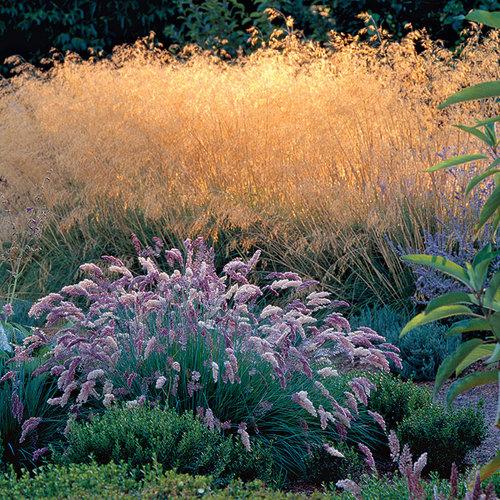 9 New And Unusual Ornamental Grasses