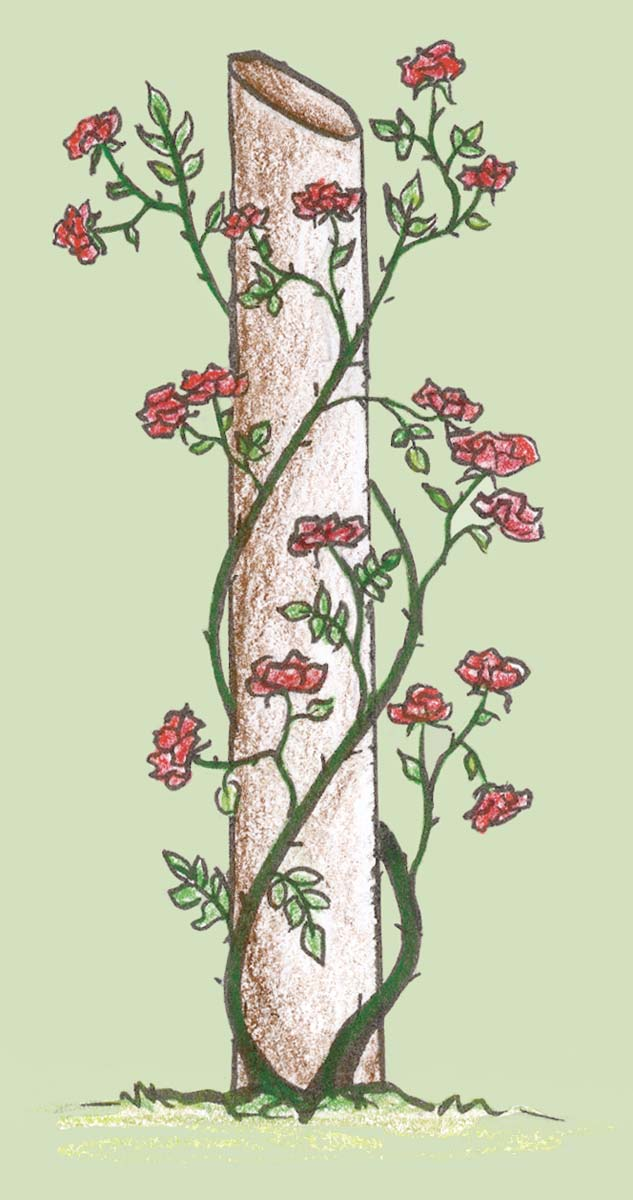 Roses growing on a post