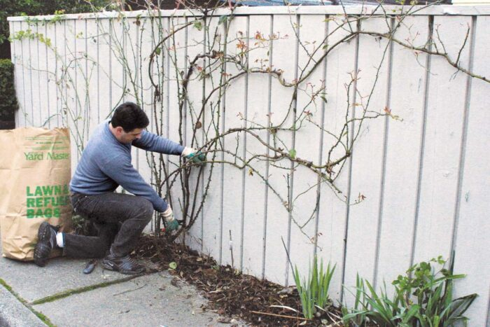 Prune out old and undesirable branches