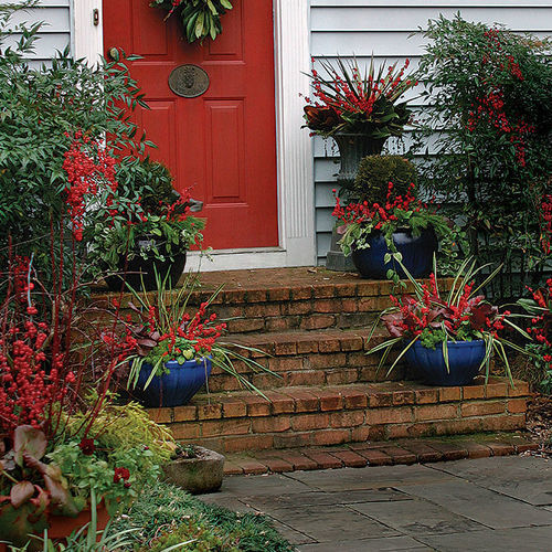 The Best Winter Containers From Outdoor Planters To Window Boxes Finegardening