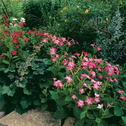 Diverse garden areas are linked visually by flagstone edging and a subtle color scheme.