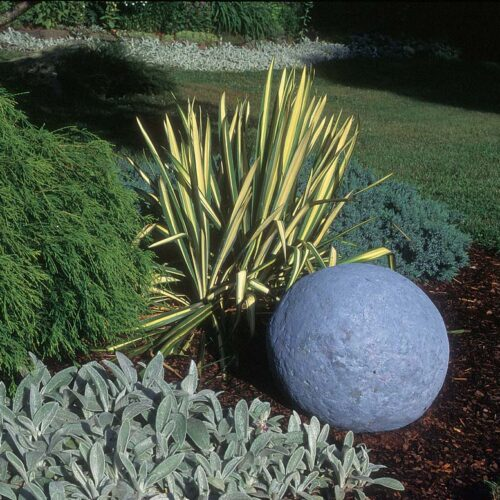 A clump of yucca with its rigid, swordlike leaves furnishes an authoritative vertical shape to contrast with the prevailing softness and low profiles of the false cypress, juniper, and lambs' ears.