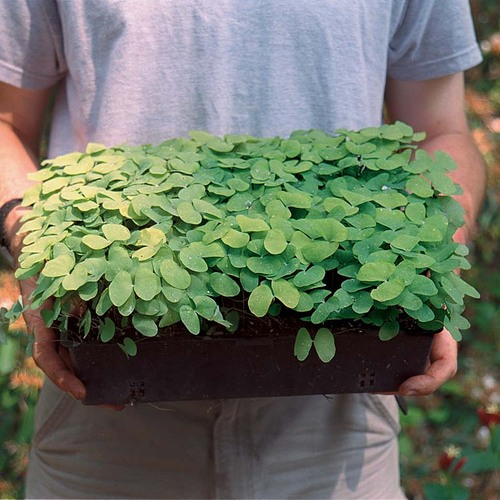 man holding container of plants