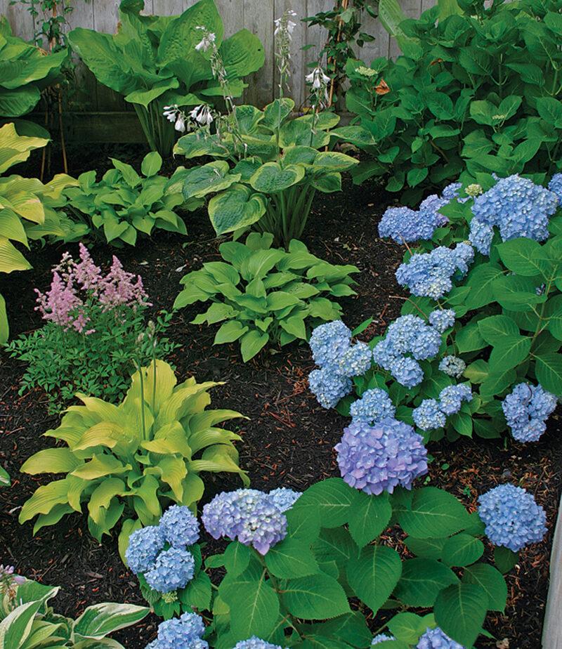 give plants room to grow