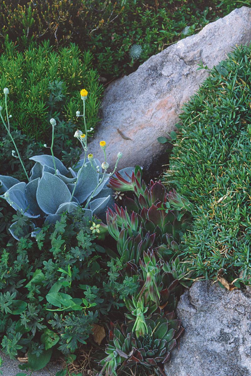plants in a rock garden