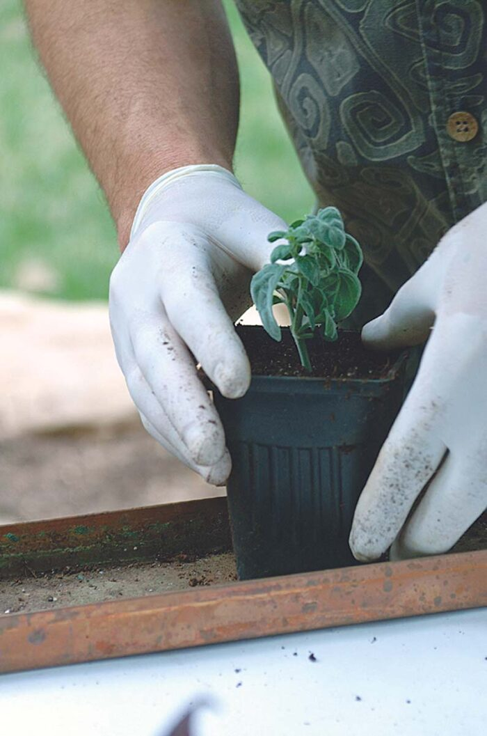 make sure your planting fits securely in its pot