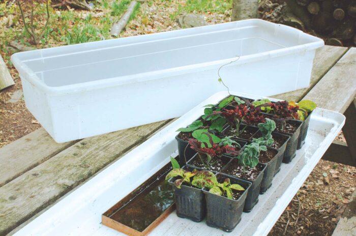 provide optimum growing space