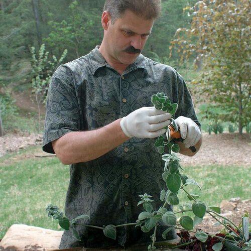 cutting plants