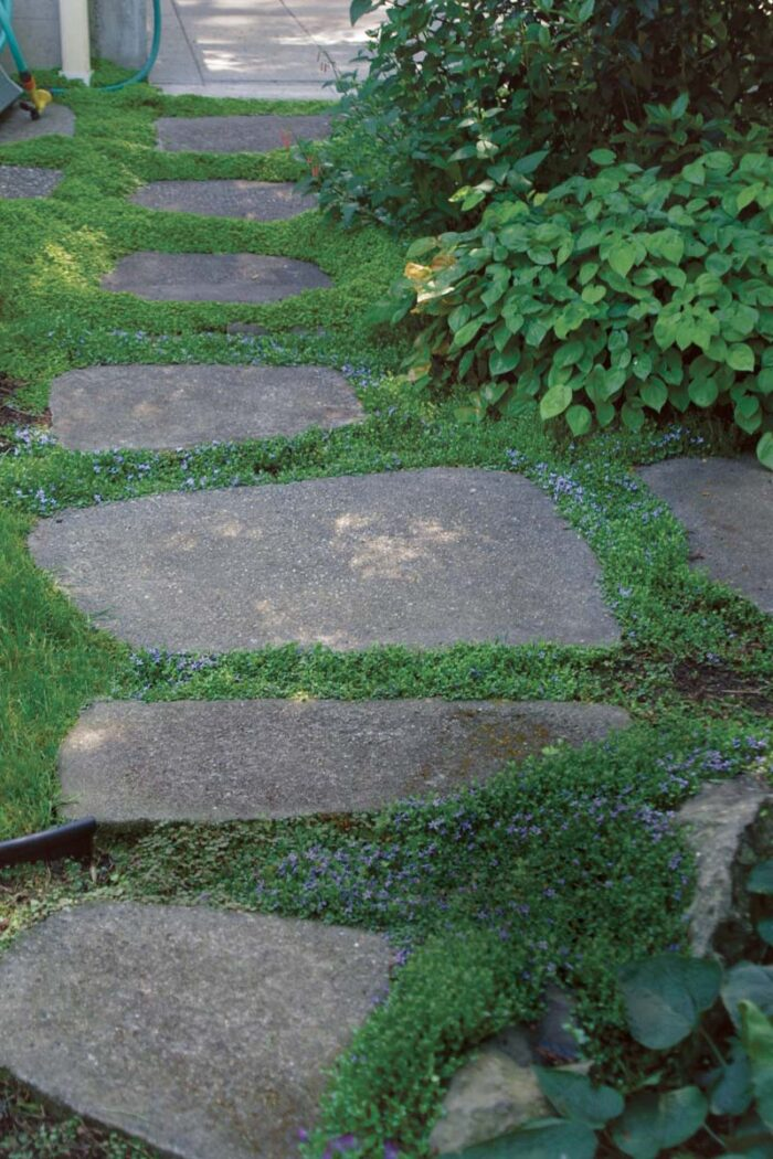 You can alternate ground covers to give a planting some variation. Blue star creeper and baby's tears provide a lovely green border around stepping stones.