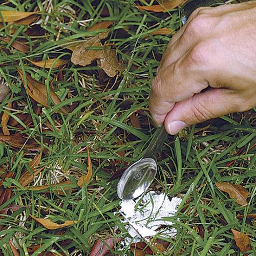 dusty milk for garden pests