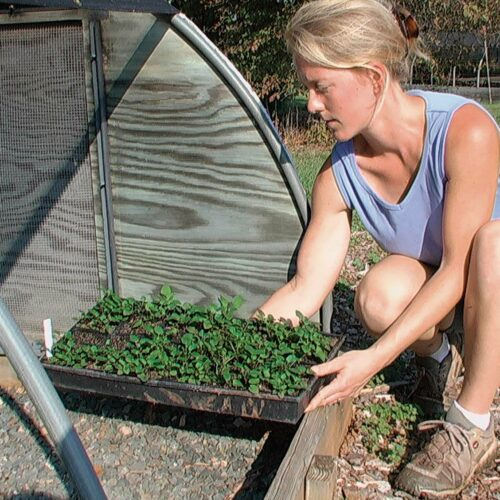 Hardening off in a cold frame