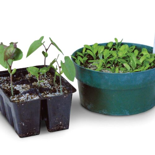 Plastic pots are best for starting seeds.