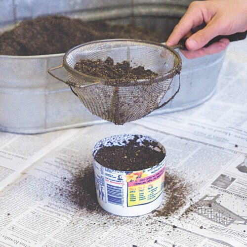 cover seeds with sieved potting mix