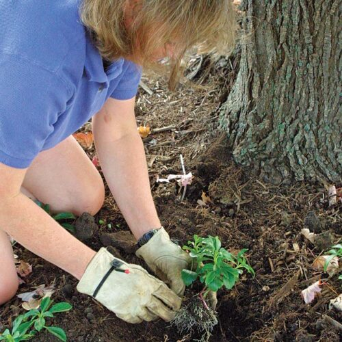 Start small. Using plants while they are still small is less of an intrusion on the tree's turf. Begin planting at least 1 foot from the trunk and work outward.