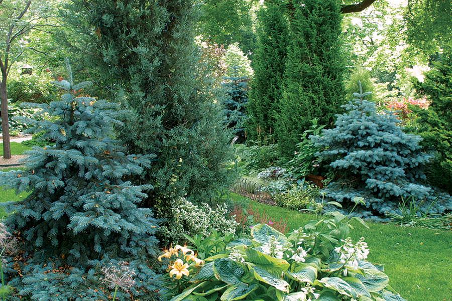 Designing With Dwarf Conifers Finegardening