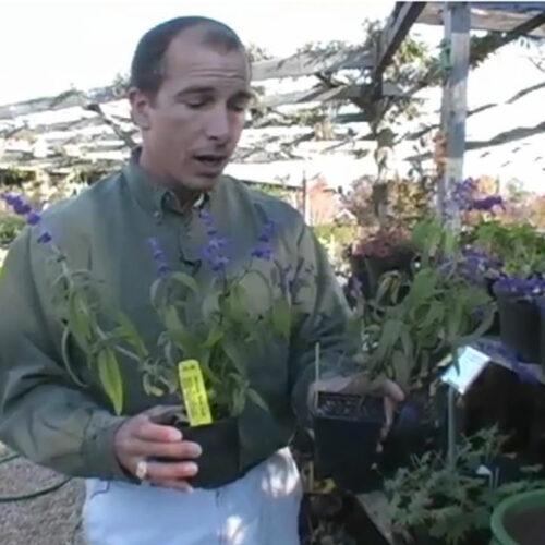 buy the best plants