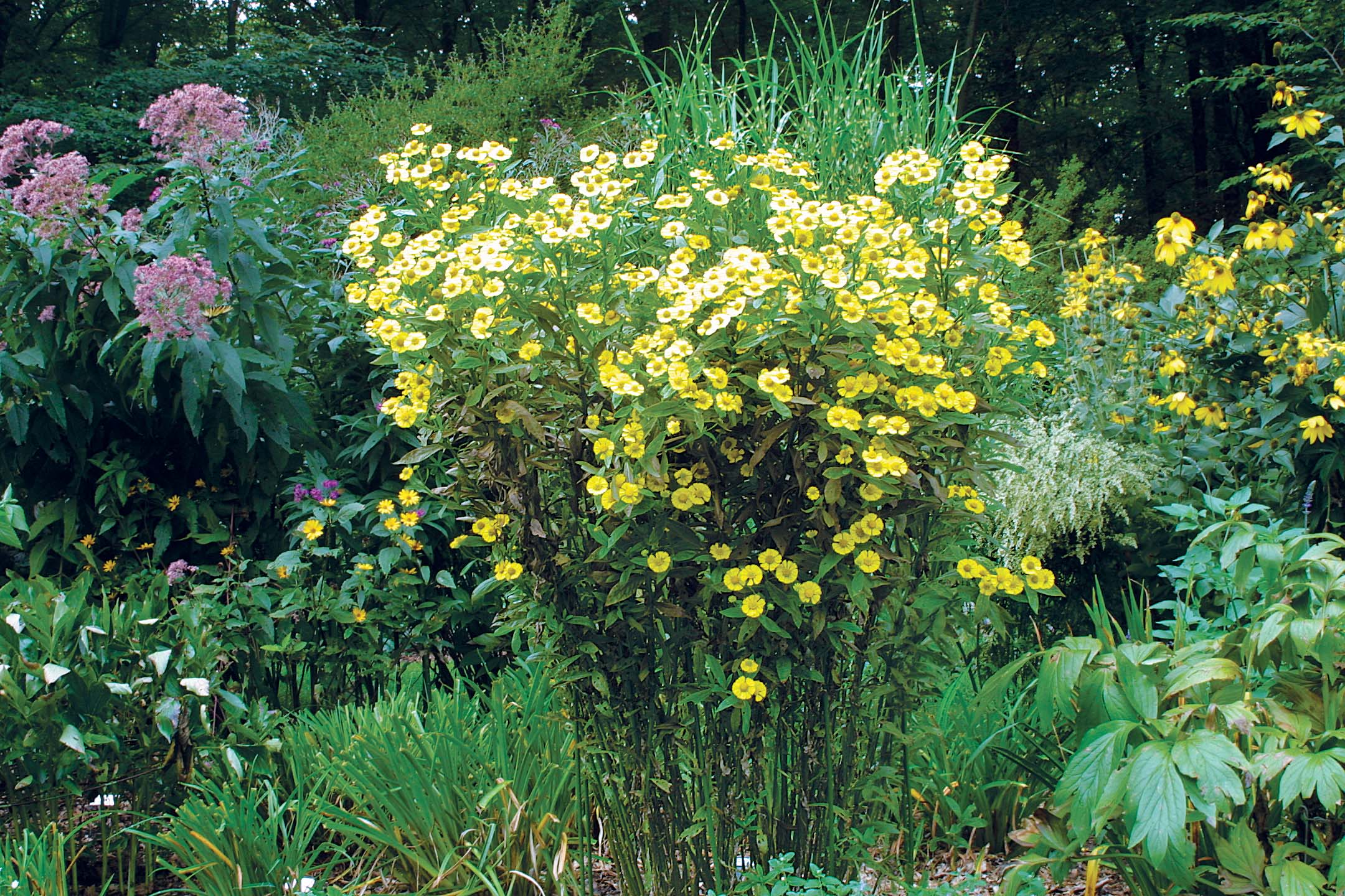 butterpat best plants for sun