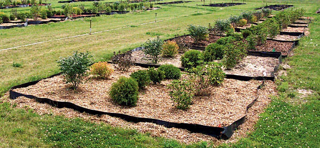 Plants benefit in several ways from having a little bark in their beds, including improved health and overall growth.