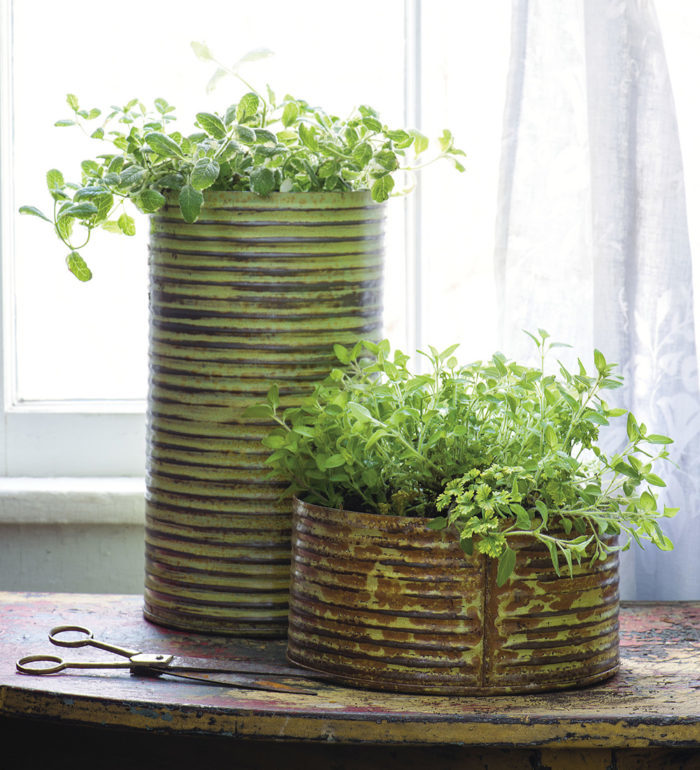 The Dos And Donts Of Growing Herbs Indoors Finegardening