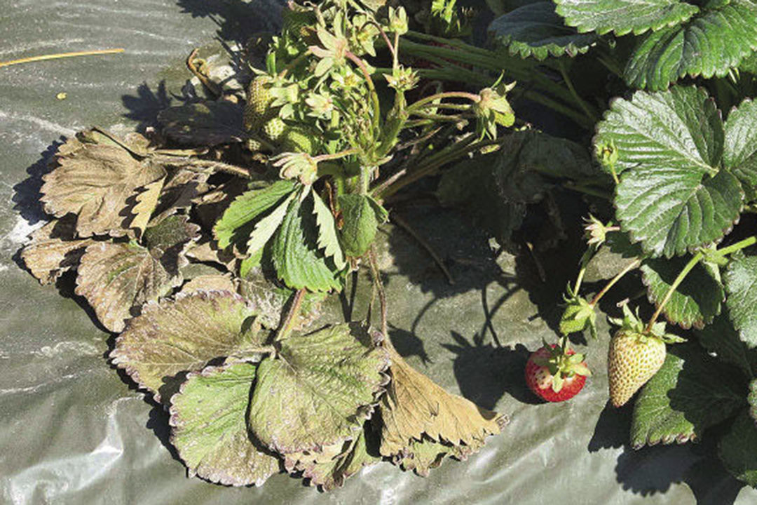 Plants dying from lack of hydration