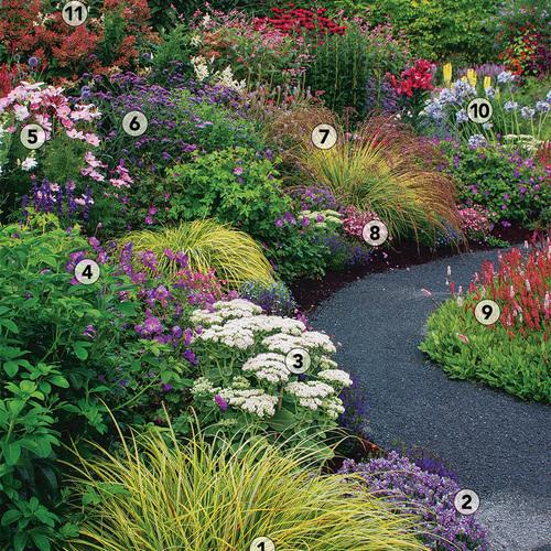 One Peak Four Seasons of Interest: Plant IDs