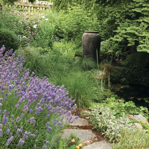 small space billowy lavendar plants