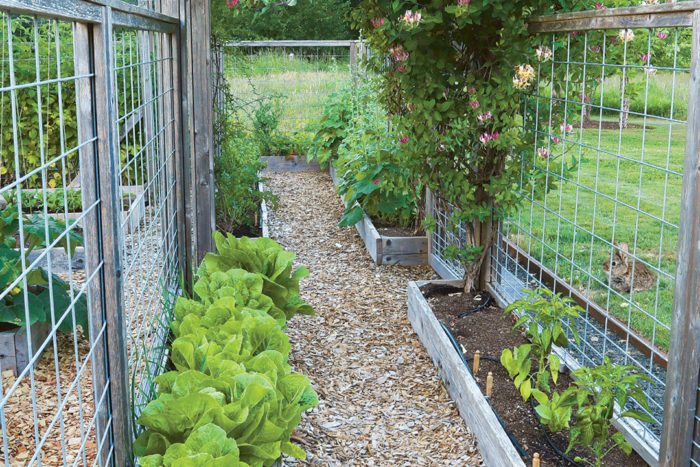 How To Design A Pest Proof Vegetable Garden Finegardening