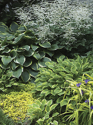 layering plants makes a small garden appear larger