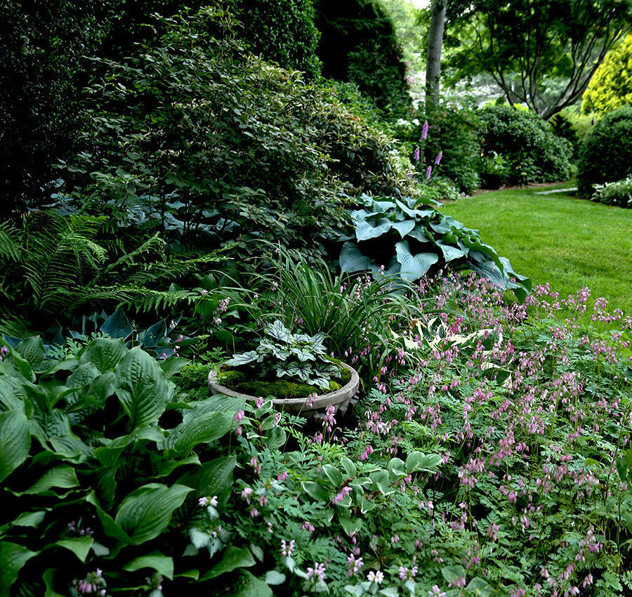 larger plants and trees enclose the small garden and create an illusion of depth and expansiveness