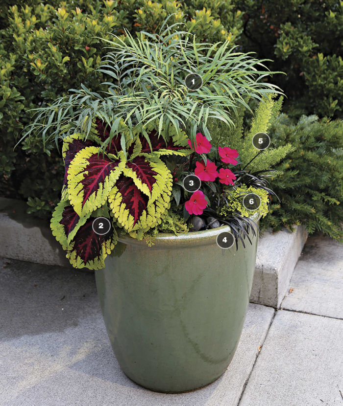 Garden Design Basics: Use Two Colors Plus Green ...
