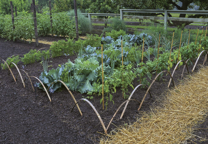Veggie Garden Design Ideas: Make Your Vegetable Garden ...