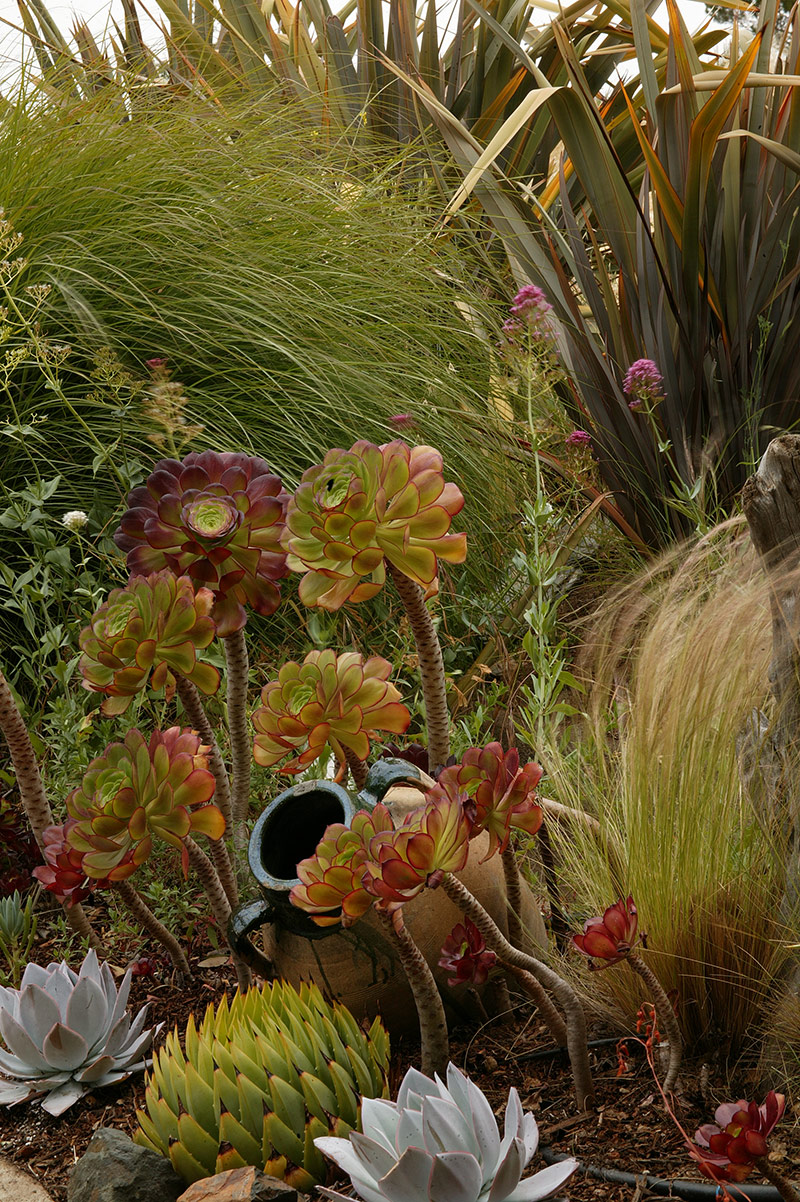 The Ultimate Texture Combo - FineGardening