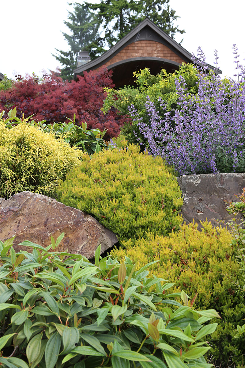 Stacie Tends To Rely On The Same Plants Through Many Of Her Designs.  Heathers (Calluna Spp. And Cvs.) And Viburnum Davidii Are Some Of Her Go To  Plants.