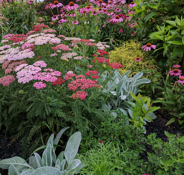 Vibrant Colored Blooms for All Seasons - FineGardening