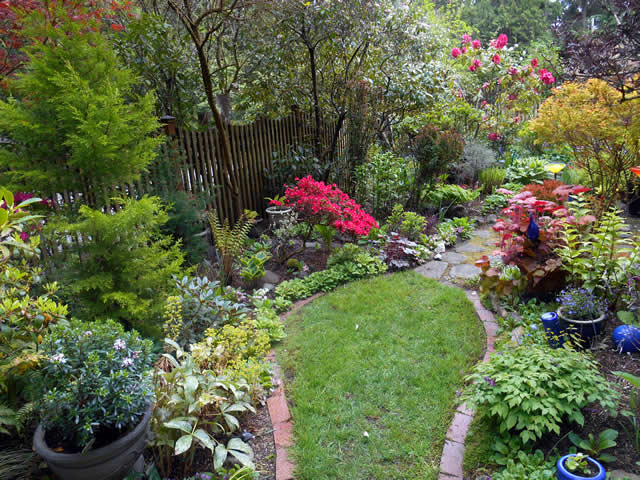 Spring Beauty on Puget Sound - FineGardening