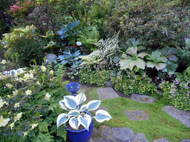 A Lively & Colorful Shade Garden in the Pacific Northwest ...